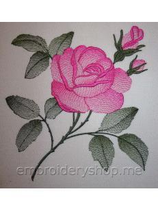 Роза flw0118