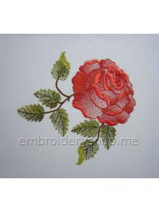 Роза flw0121
