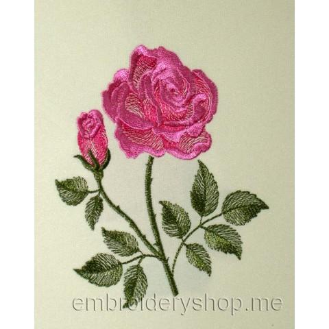Роза flw0095