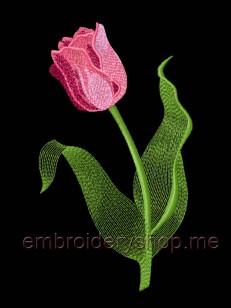 Тюльпан flw0103