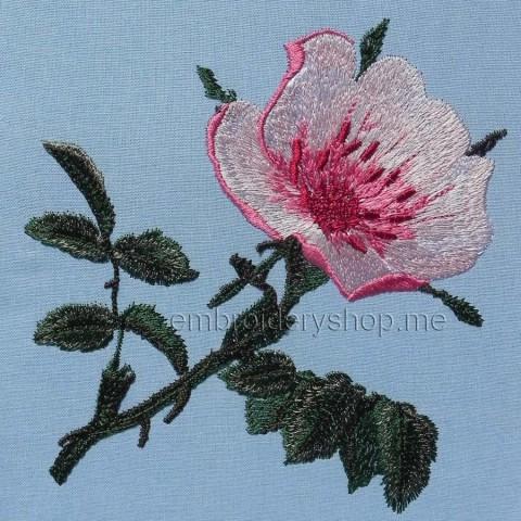Цветок шиповника flw0109