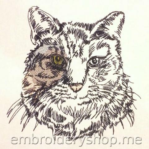 Кот cat0017
