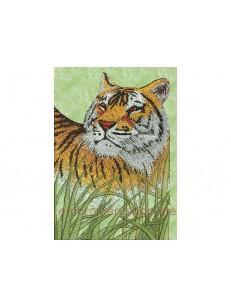 Тигр_tgr0008