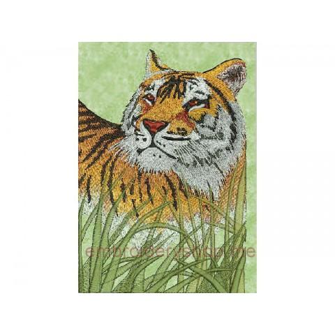 Тигр tgr0008