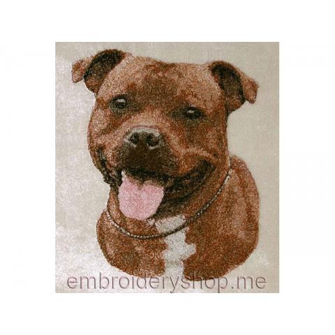 Стаффордширский бультерьер, сфумато dog0012