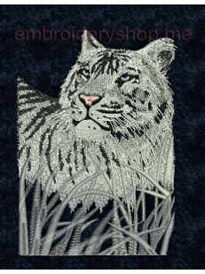 Белый тигр_tgr0005