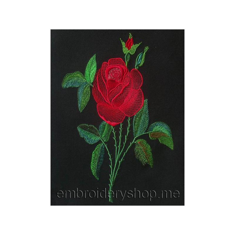 Роза flw0064